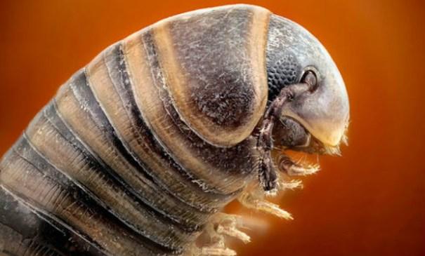 НаАлтае обнаружили очередной неизвестный науке вид животных— Край многоножек