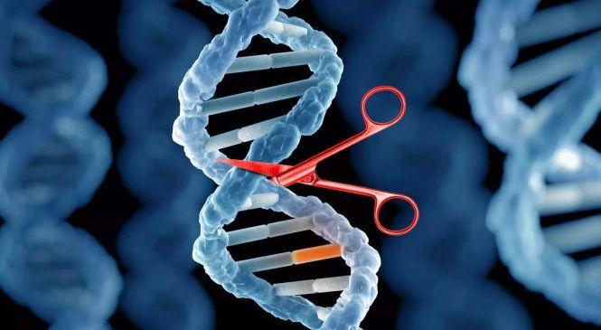 Умерли четыре добровольца, участвовавшие в клинических испытаниях экспериментальной генной терапии