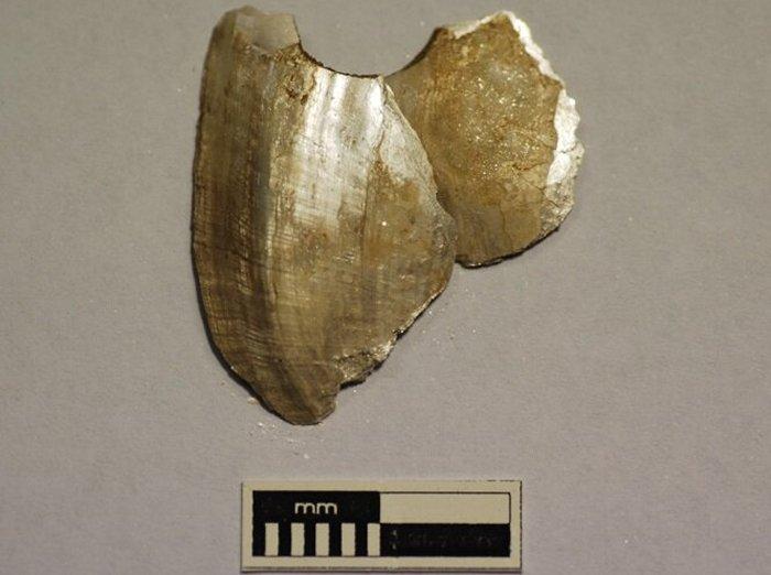 Артефакт из перфорированной ракушки из Мурравонга (Глен Лосси) в нижнем течении реки Мюррей в Южной Австралии. Предоставлено: Университет Флиндерса.