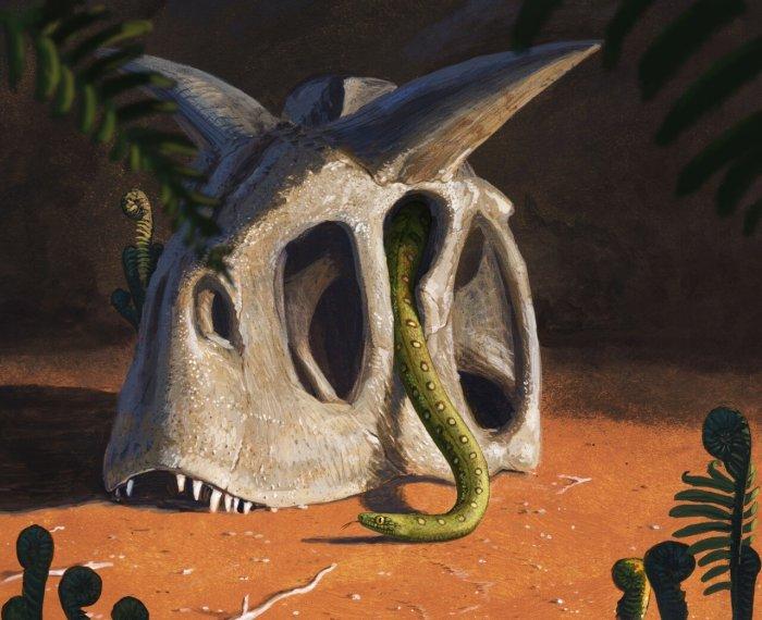 Современные змеи произошли от нескольких выживших после гибели динозавров астероида