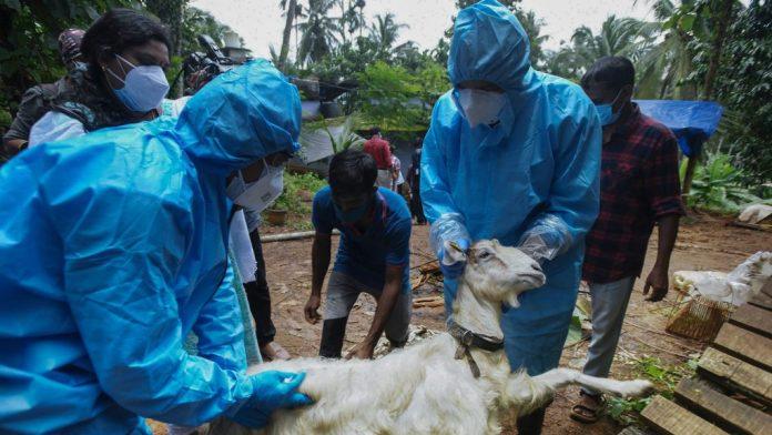 Вспышка вируса нипах в Индии, вспышка вируса нипах в Керале, вспышка вируса нипах в Индии, штат Керала