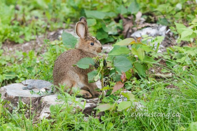 image of bunny sitting on a short stump