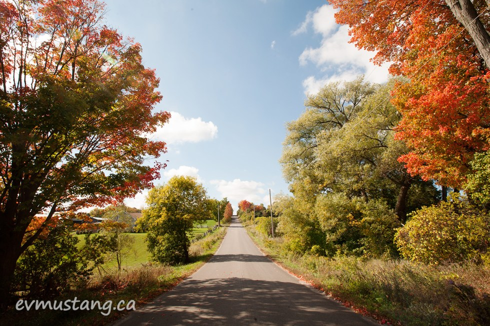 image of a country road extending through colourful fall trees