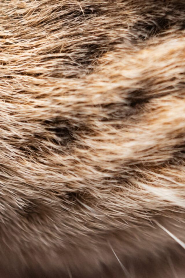 macro image of a cat's muzzle showing whiskers and nose