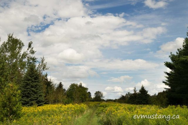 image of white clouds and blue sky over late summer coloured fields and trees off the trail at harold town conservation area