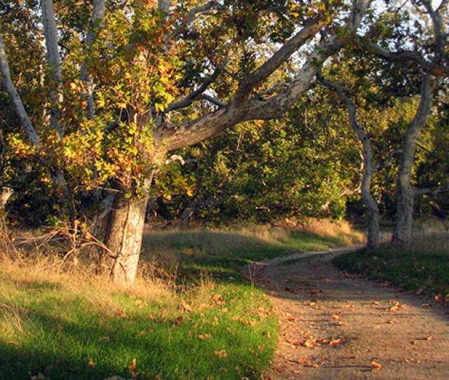 Sycamore Grove Park