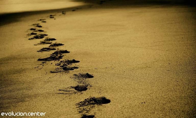 Lee más sobre el artículo Meditación caminando