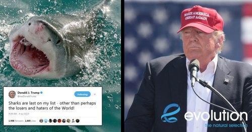 attention president trump evolution diving resort