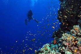 Thistlegorm Egyptian Red Sea