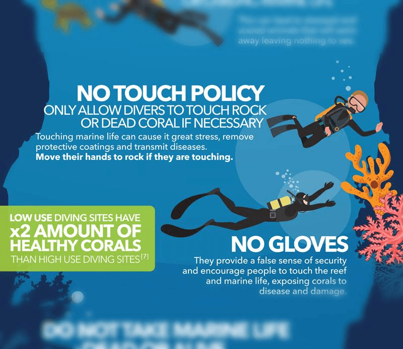 scuba no touch policy