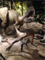 Albertosaurus Evolution Literacy G Paz-y-Mino-C photo