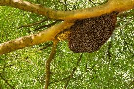 Bee Hive 1 - Bee Hive