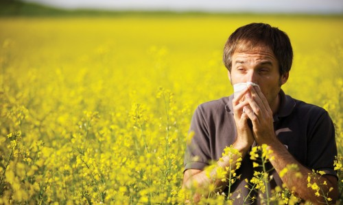 Annapolis Urgent Care Spotlight: Fall Allergy