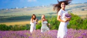 lavender - lavender
