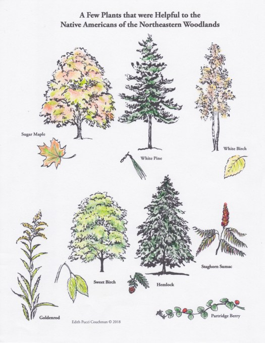 Plants that Were Helpful Colored