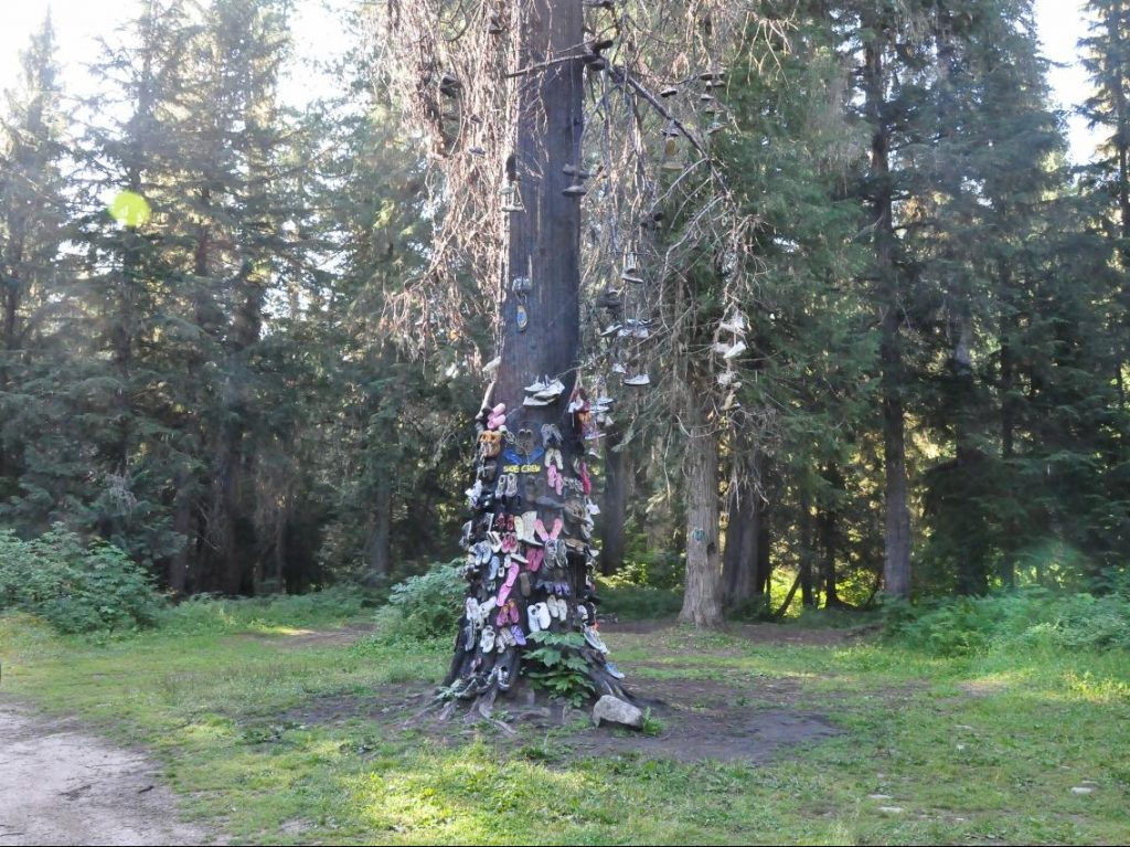 Tree covered with shoes in forest, RV Adventures