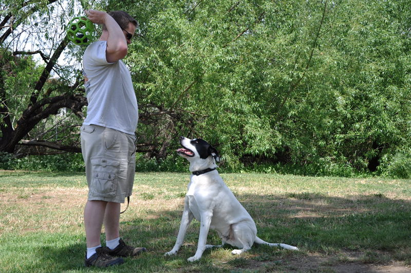 Adam and Ace playing fetch in a park in Yakima, WA while living in the RV full time.