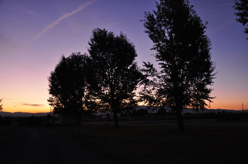 The outline of the trees right after sunset on our full time RV living adventure.
