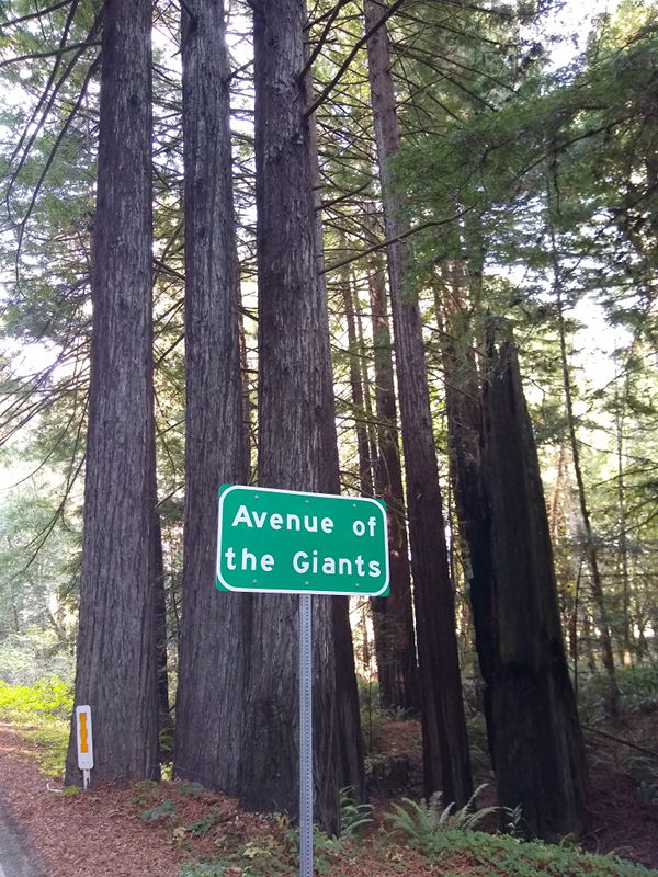 Sign for the Avenue of the Giants.