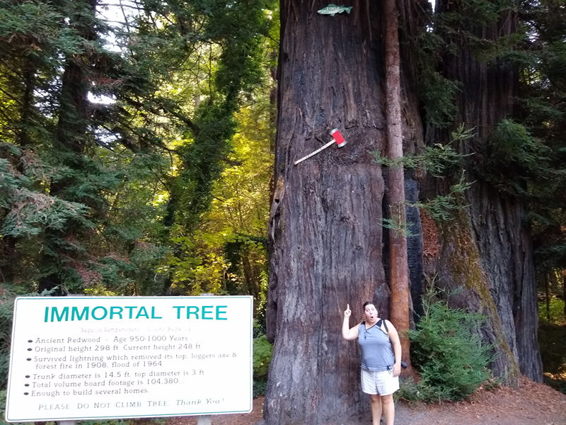 Adrianne standing in front of the Immortal Tree on our tour down the Avenue of the Giants.