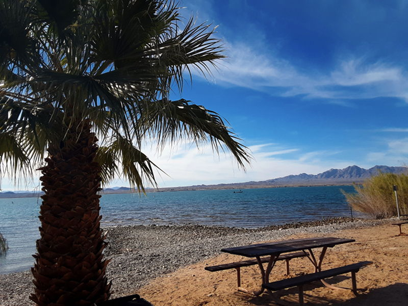 Looking out at Lake Havasu with a palm tree and picnic table on the edge of the water.