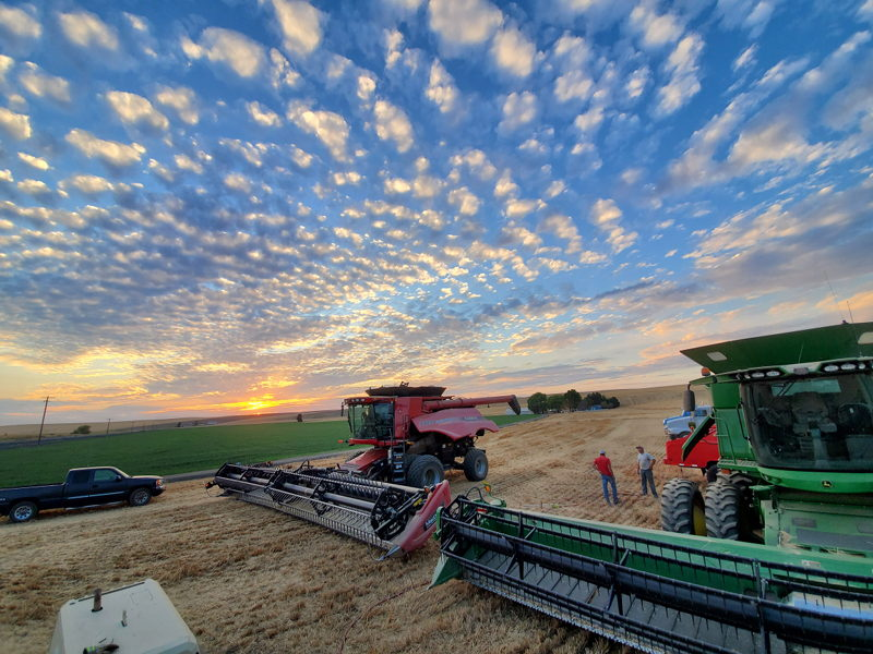 Red and green combines parked for the night in the field at sunset.