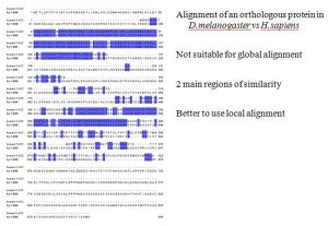 from Konrad's presentation; example of local alignment as these sequences are not appropriate for global alignment.