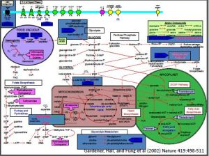 targets of drug therapies, vaccines