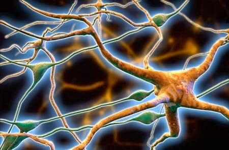 ღეროვანი უჯრედები – ახალი ერა მედიცინაში