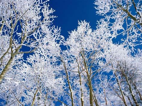 Деревья умирают стоя. Новый год деревьев – Ту би-Шват ...