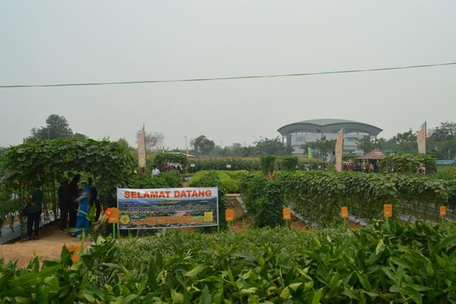 jambore varietas hortikultura