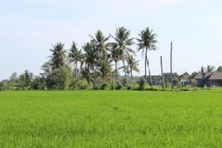 Крайпътен пейзаж - о. Бали