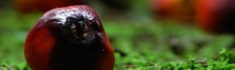 Сбогом на палмовото масло