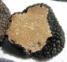 EVS Translations truffle pix