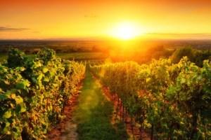 Pastoral – Le mot du jour - EVS Translations