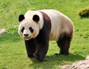 World Wide Fund for Nature (WWF) – Wort des Tages - EVS Translations
