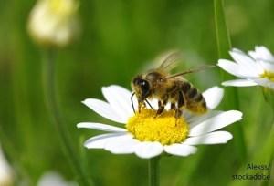 Пчела / Bee – Дума на деня - EVS Translations