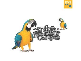 Phraseologie – Wort des Tages – EVS Translations