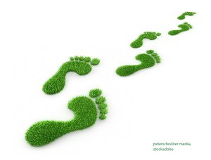 Ecological Footprint – Word of the day – EVS Translations