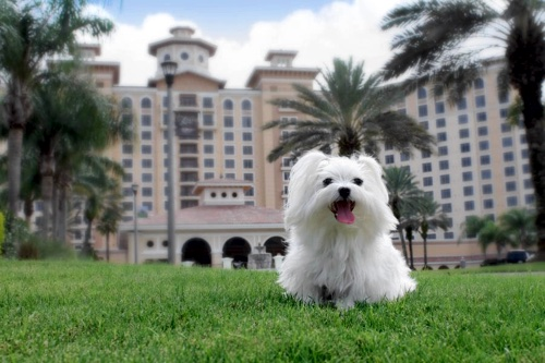 Rosen Shingle Creek with Dog