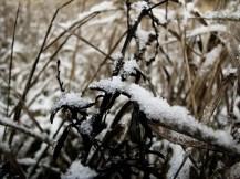 zim0.3.2