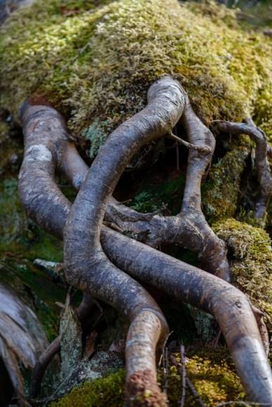 Wood Curves 1 - Assynt