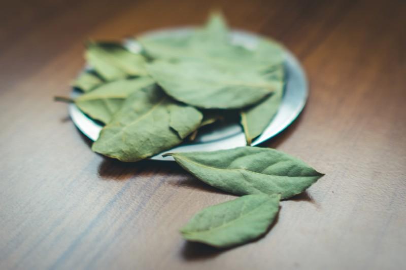 liść laurowy - świetny oczyszczacz skóry