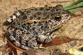 C:\Users\HP CORE I3\Pictures\AMPHIBIAN.jpg