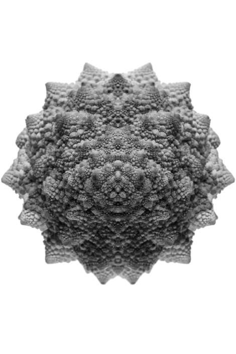 struktura_04