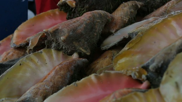 Conch poisoning cases could possibly rise to as much as 60