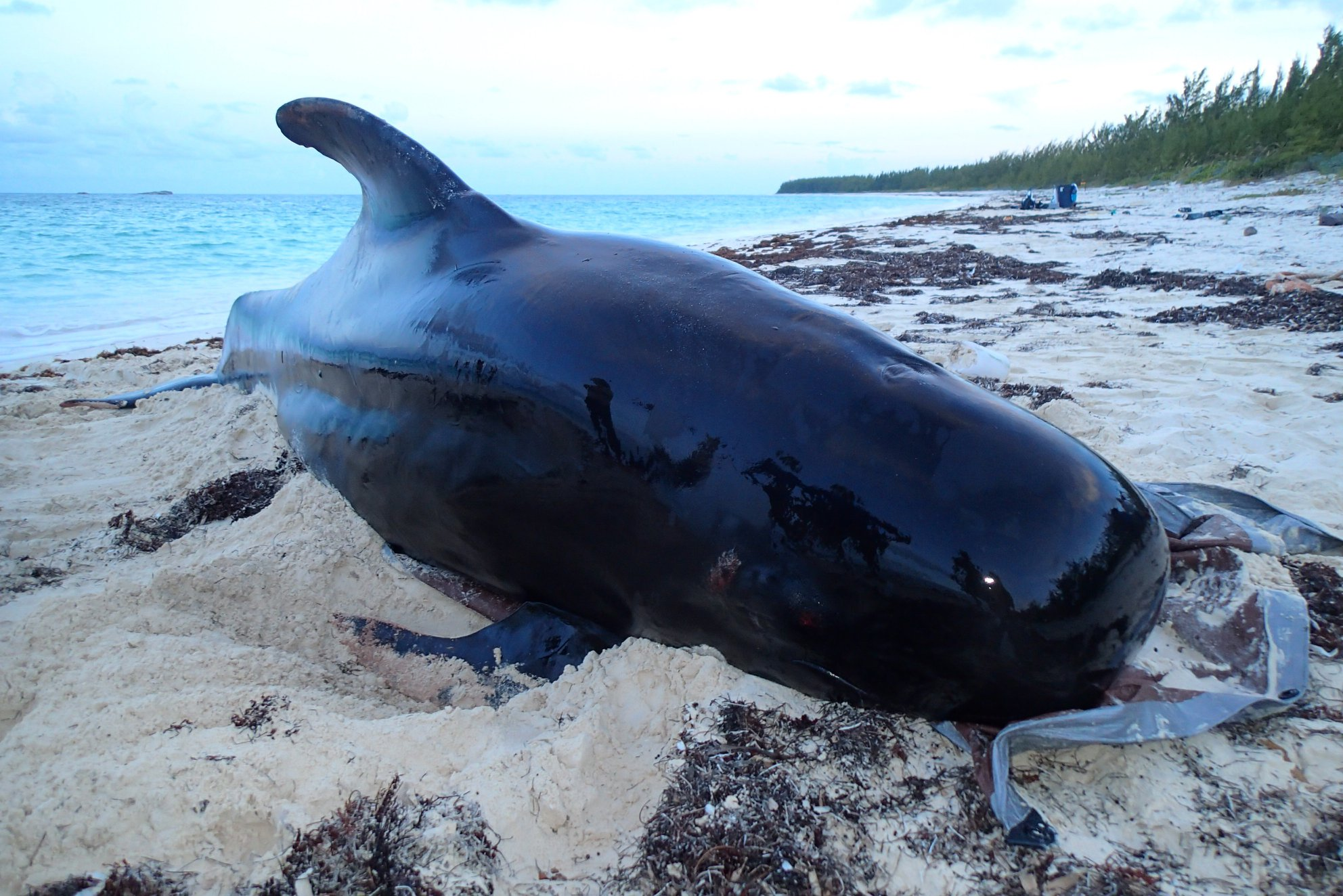 Death of beached whale evokes conflicting views