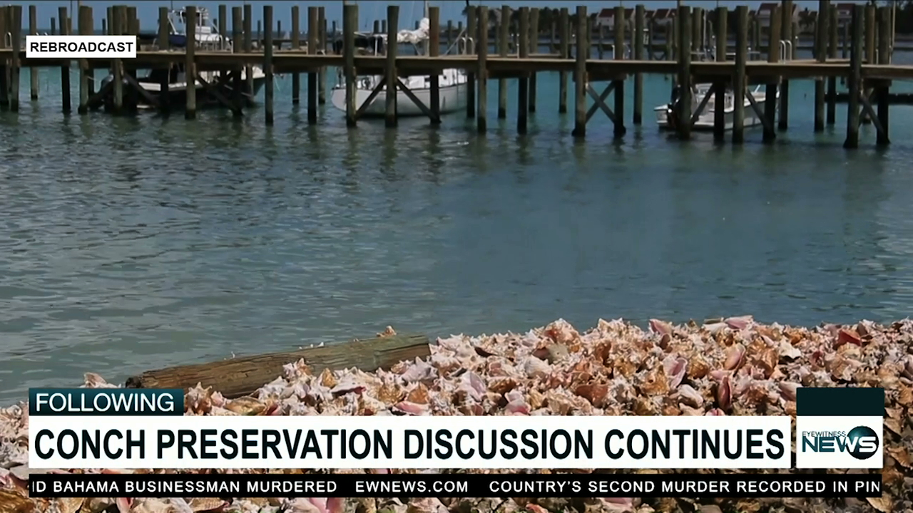 Govt to reduce the amount of conch exported