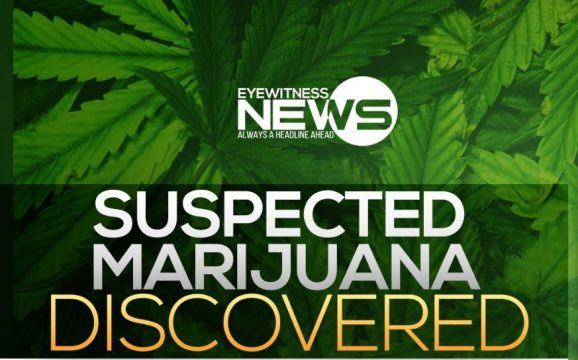 Suspected marijuana recovered from abandoned building