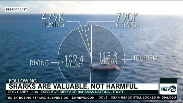 BNT executive director decries shark killing video